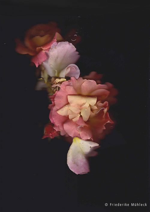 4aa-flowershow-web