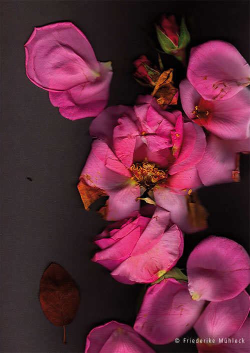 4aa3-flowershow-web